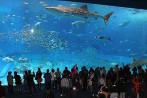 沖縄美ら海水族館の大水槽「黒潮の海」