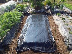 家庭菜園の区画どり