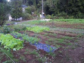 10月31日の農園風景(まだまだ栽培中です)