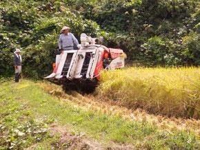 9月下旬 標高の低い田んぼは刈時を迎えました。地元の生産組合の方のご協力の元次々と刈られていきます。