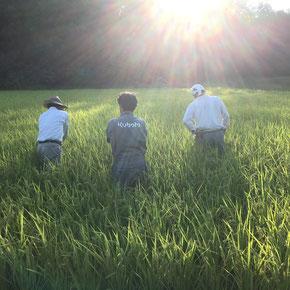 9月中旬 背中で語る漢達。まもなく収穫。