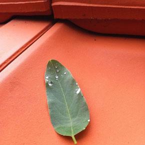 Dachflächen, Rinnen und Rohre jährlich pflegen und begutachten.