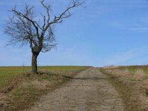 Wanderweg bei Tauchersreuth