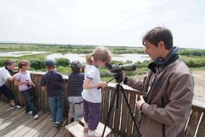 Somme Groupes - Groupes - Somme - Voyages en groupes - Baie de Somme - Oiseaux - Parc du Marquenterre - Scolaires - Nature - Activités - Ateliers - Séjours - Saint Quentin en Tourmont