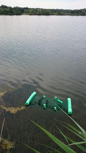 Einsatz einer Molchreuse in einem Baggersee