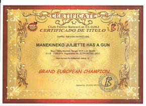 Grand european champion bengal femelle