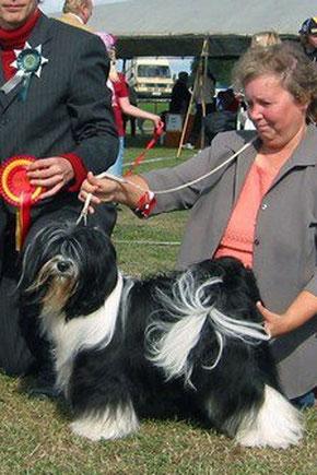 Oelde_Tibet Terrier_Peter Künzel_Anke Preine_Ti La Shu_Katja Rauhut