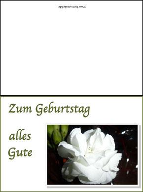 Weiße Nelke