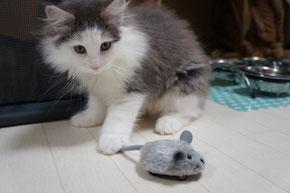 ねずみを狙う子猫ちゃん☆
