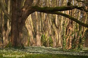 Bot. Garten Rombergpark Dortmund