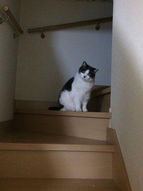 お友達の猫〝シュガー〟
