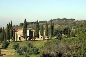 Olivenöl von Il Casalone Vignoli bei Florenz Toskana