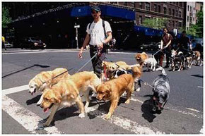 Dog Walkers in NEW YORK CITY.....
