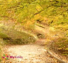 Herbstlicher Wanderweg oberhalb der Tropfsteinhöhle