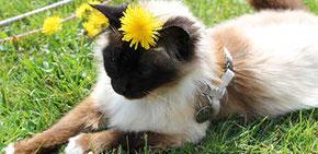 Ankara, notre chatte superviseur des projets terminés