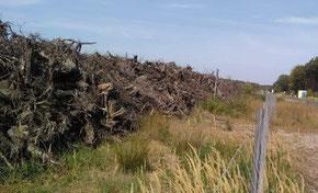 Habitate, Wurzelhaufwerke, LEAG, ökologische Barriere, ökologische Entsorgung und Sanierung, Habitatbau