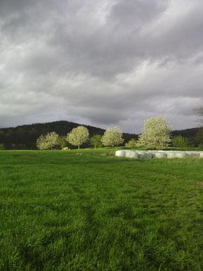 Frühling am Rotstein Oberlausitz