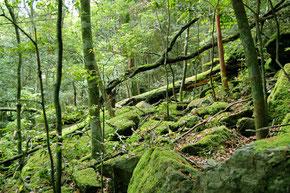 湿潤なため苔がよく育つ