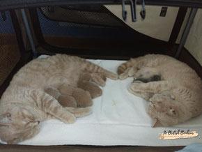 La poucette a rejoint sa sœur dans la maternité avec ses troix bébés