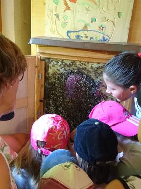 Die Kinder bestaunen das Bienenvolk.