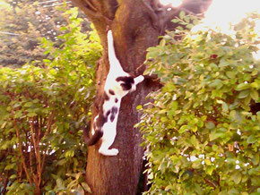 Leo scalatore