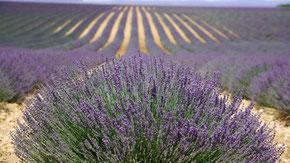 Bild: Frauennetz Reise in die Provence