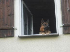 Haustiere leben auch in vielen deutschen Wohnungen.