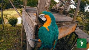 guacamayo ave bird iquitos