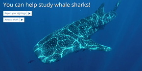 Cover photo for Wildbook for Whale Sharks