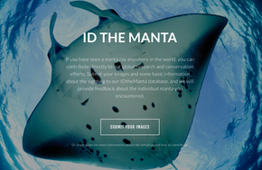 ID the Manta - photo of the belly of a Giant Manta Ray