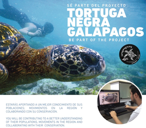 Galapagos Shark Diving - Turtle Identification