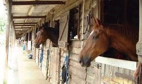 attrezzature per Cavalli