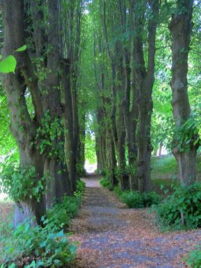 Bäume Allee