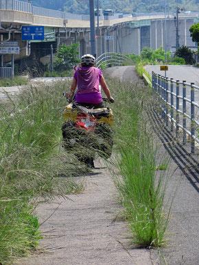 Nicht immer sind die Radwege ein Hit. Dann nehmen wir eben die Strasse.