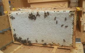 eine prall gefüllte Honigwabe
