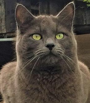 Hellwissen - Katze - Sinneskanäle