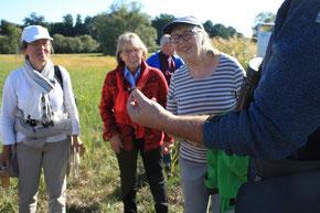 Gerd Bauschmann zeigt den Teilnehmern eine Sumpfschrecke