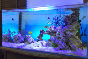 海水魚水槽W900設置事例
