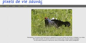 Site de André Moenne Loccoz
