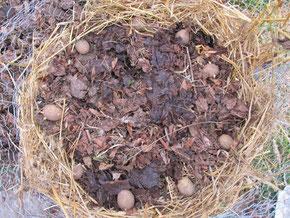 Kartoffelturm bauen