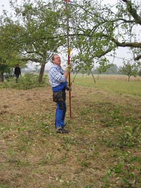 Norbert Schneider beim Obstbaumschnitt