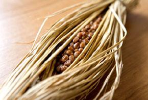 納豆とエクオール