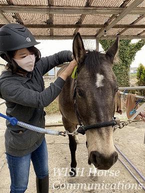 馬との調和