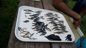 Fishes caught in Costa Rica