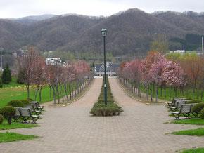 ほしみ公園の桜