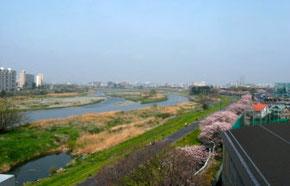 狛江市を流れる多摩川
