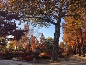 韓南大学校の秋風景