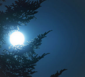 Mondphasenschnitt