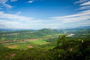 Bosques húmedos amazónicos. / © SERFOR.