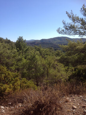 Dichter Wald auf dem Profitis Ilias
